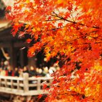 Colorful Autumn Leaves will Light Up Japan soon !